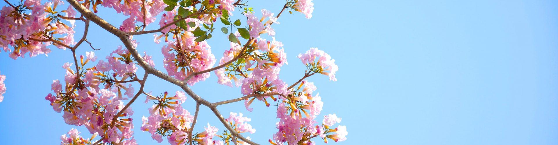 bloom-blossom-flora-96654